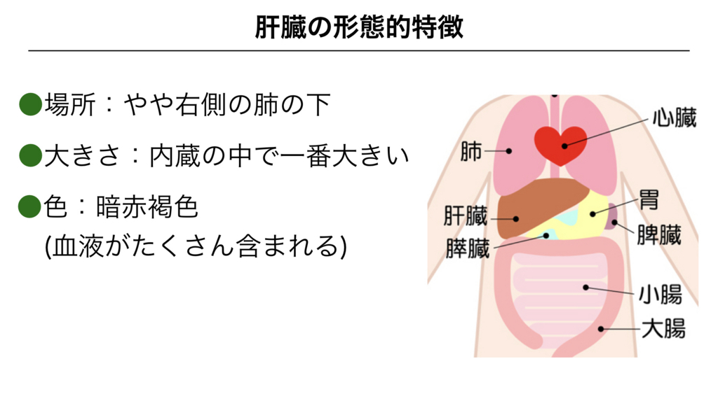 f:id:shimasensei:20180306180107j:plain