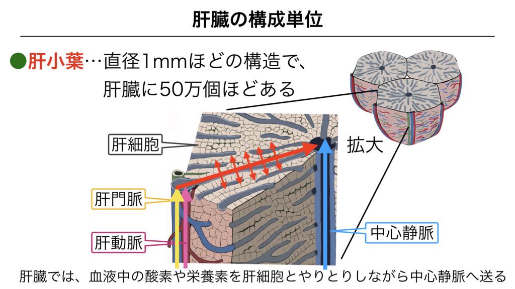 f:id:shimasensei:20180306180151j:plain