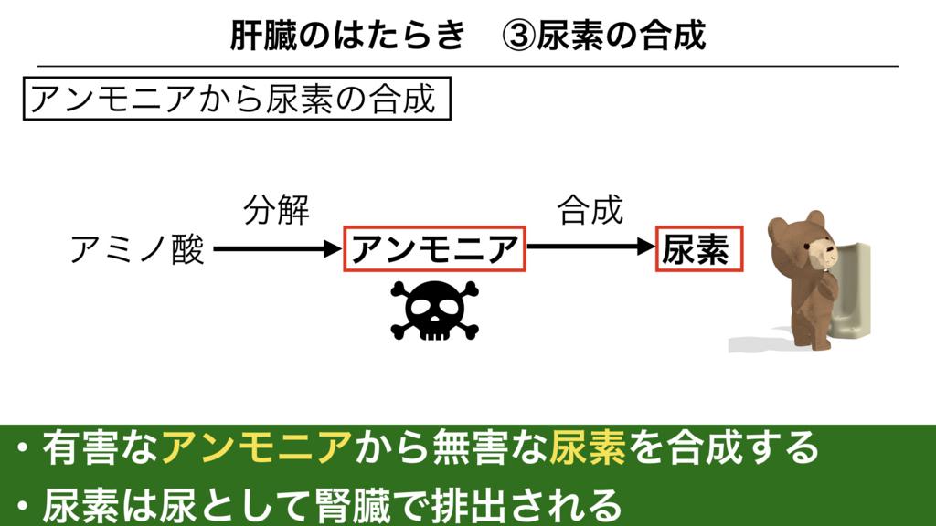 f:id:shimasensei:20180306180336j:plain
