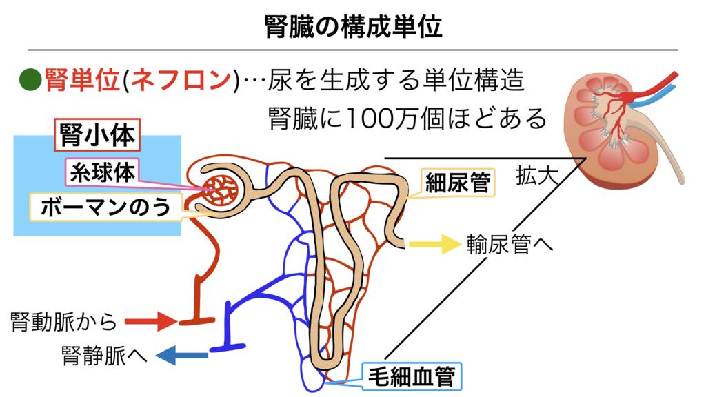f:id:shimasensei:20180306183655j:plain