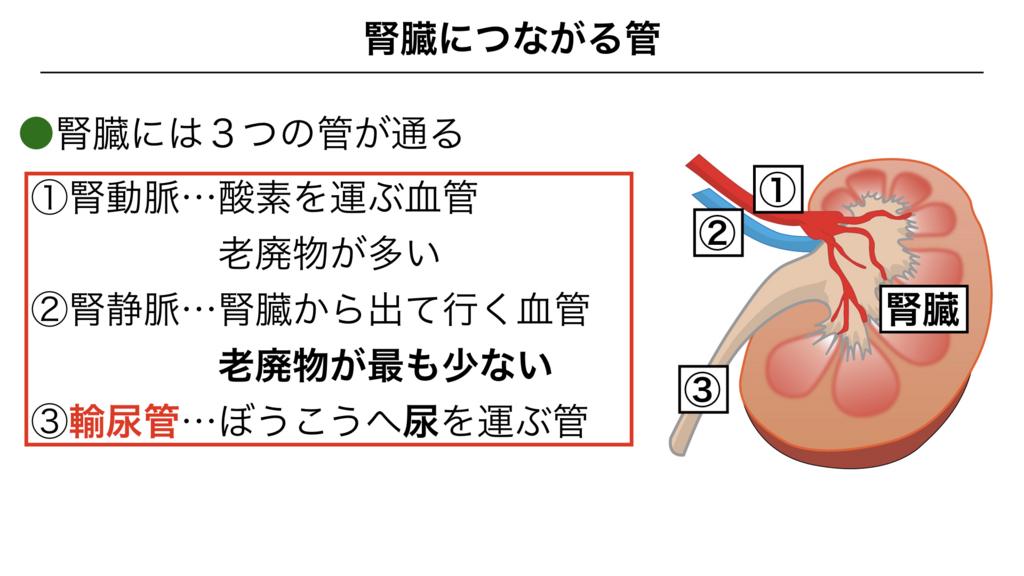 f:id:shimasensei:20180306183710j:plain