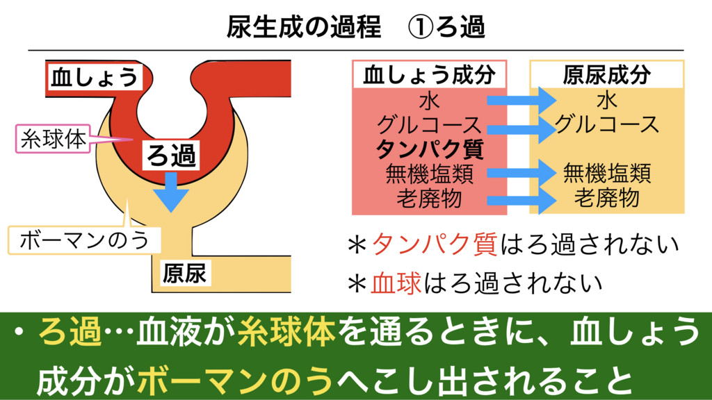f:id:shimasensei:20180306184257j:plain