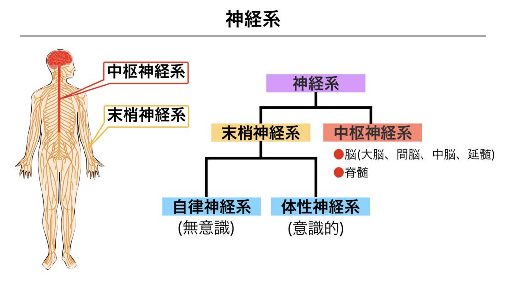 f:id:shimasensei:20180307174118j:plain