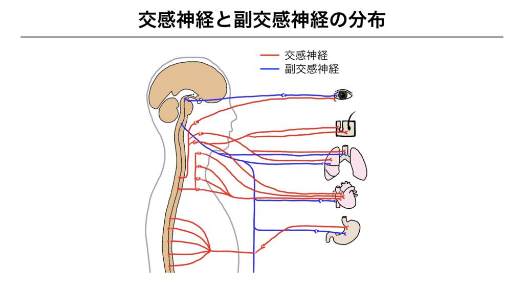f:id:shimasensei:20180307180501j:plain