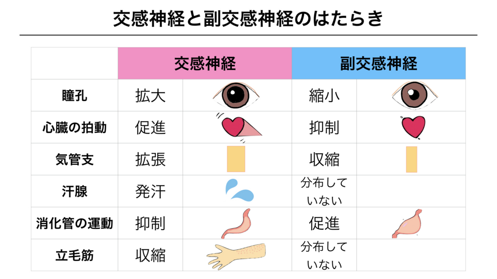 f:id:shimasensei:20180307180704j:plain