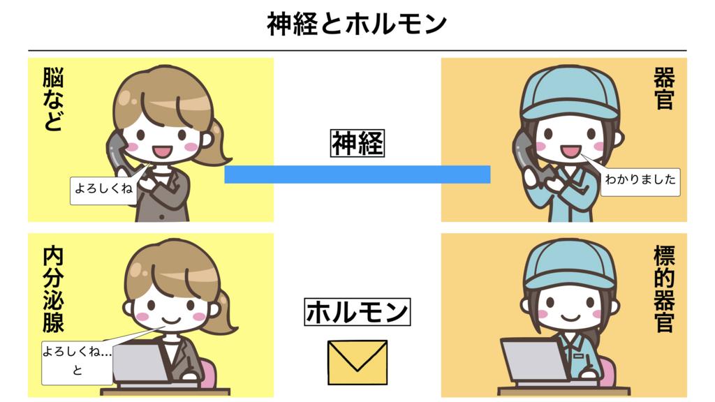 f:id:shimasensei:20180309124435j:plain