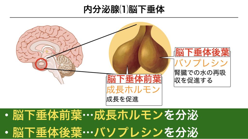 f:id:shimasensei:20180309124508j:plain