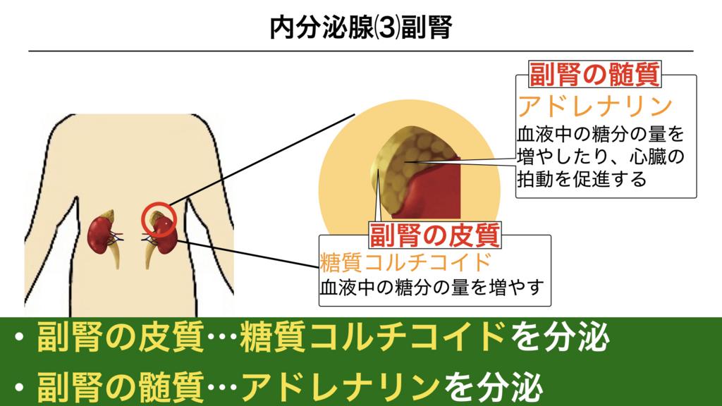f:id:shimasensei:20180309124535j:plain