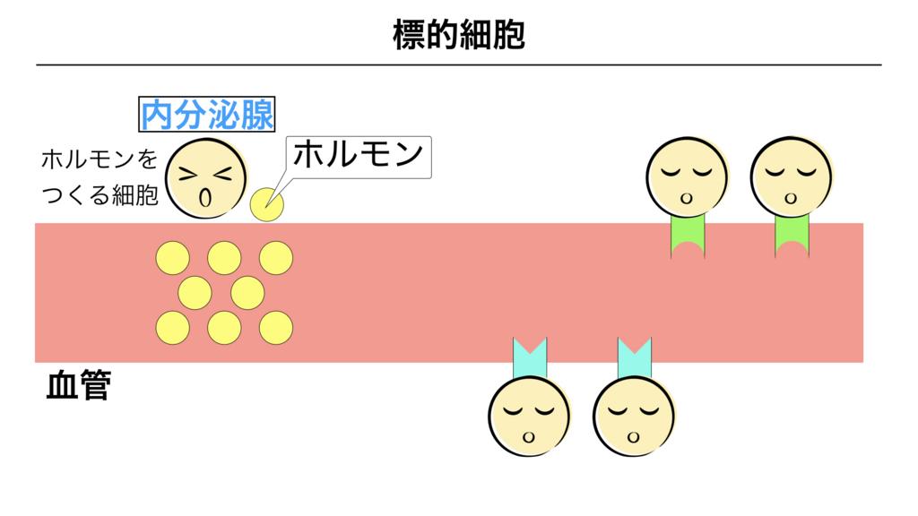 f:id:shimasensei:20180309124601j:plain