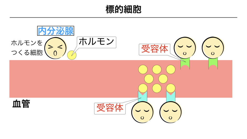 f:id:shimasensei:20180309124615j:plain
