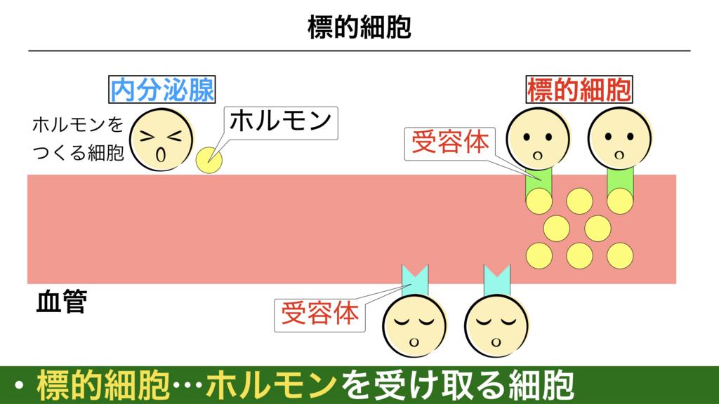 f:id:shimasensei:20180309124627j:plain
