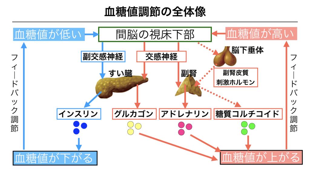 f:id:shimasensei:20180310085345j:plain