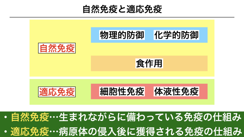 f:id:shimasensei:20180311081827j:plain
