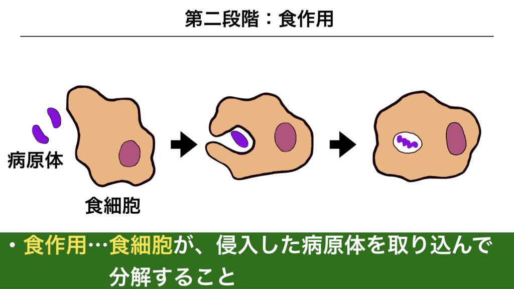 f:id:shimasensei:20180311082735j:plain
