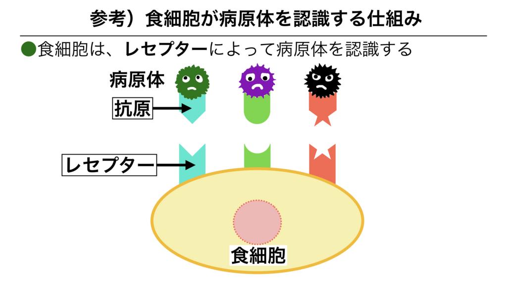 f:id:shimasensei:20180311082904j:plain