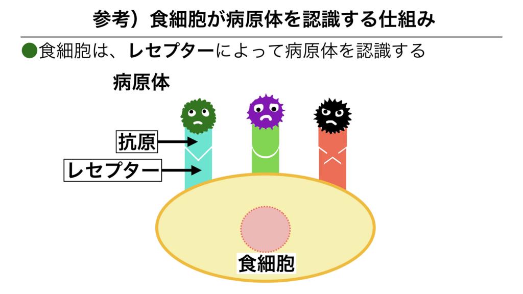 f:id:shimasensei:20180311082942j:plain