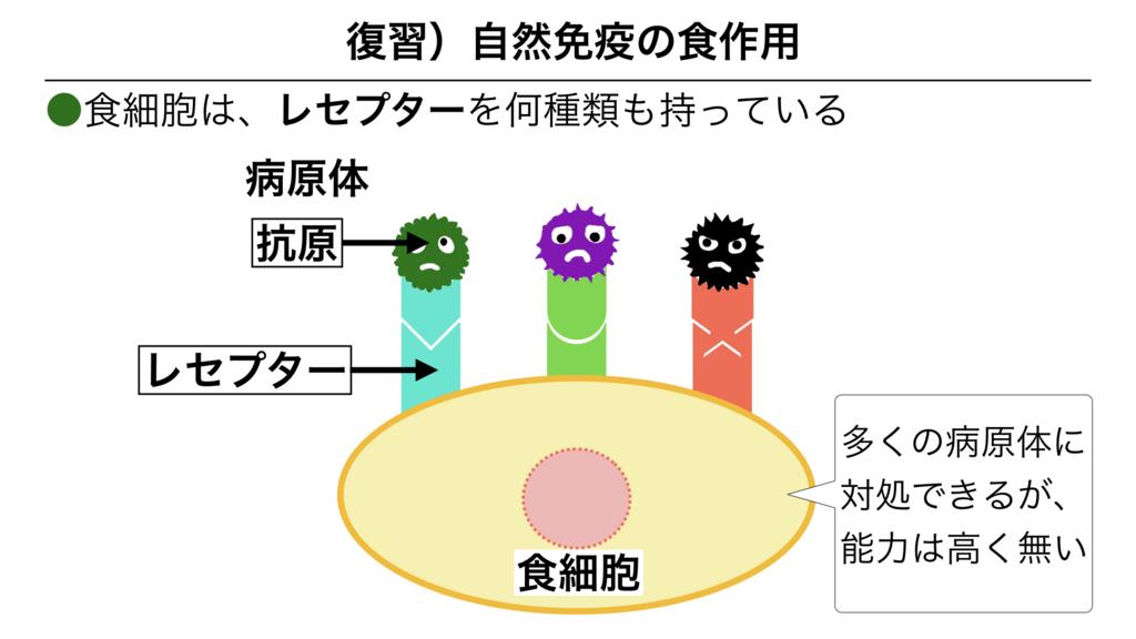f:id:shimasensei:20180312074335j:plain