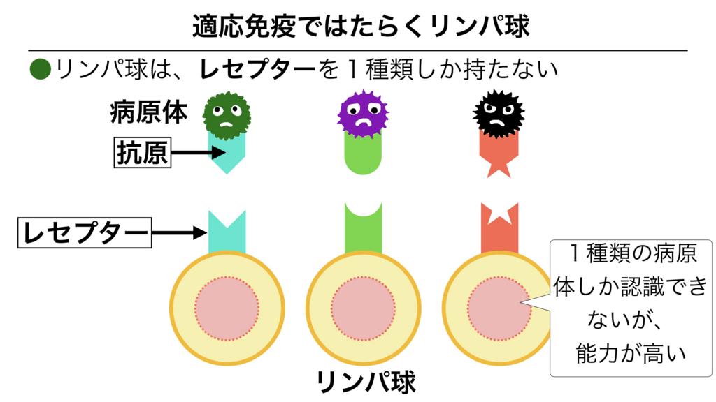 f:id:shimasensei:20180312074429j:plain