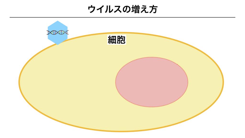 f:id:shimasensei:20180312074748j:plain