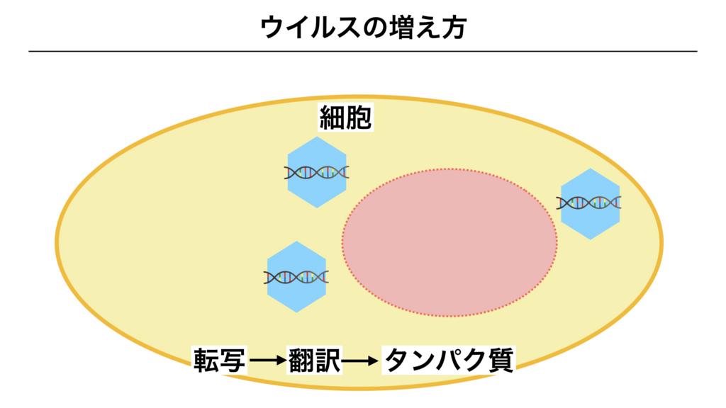 f:id:shimasensei:20180312075137j:plain