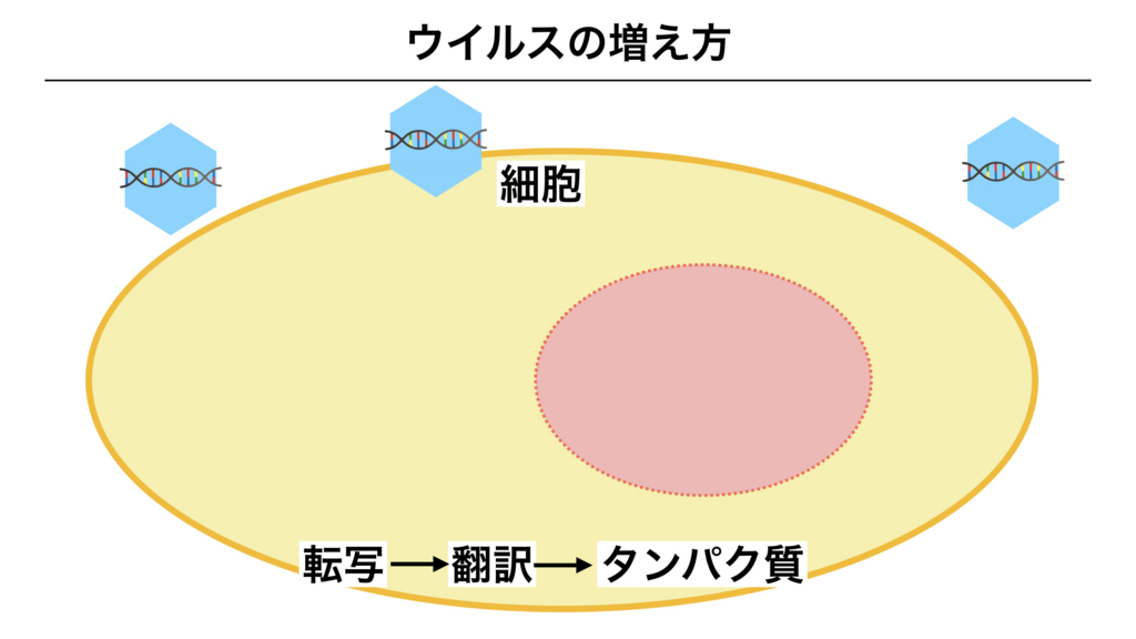f:id:shimasensei:20180312075201j:plain