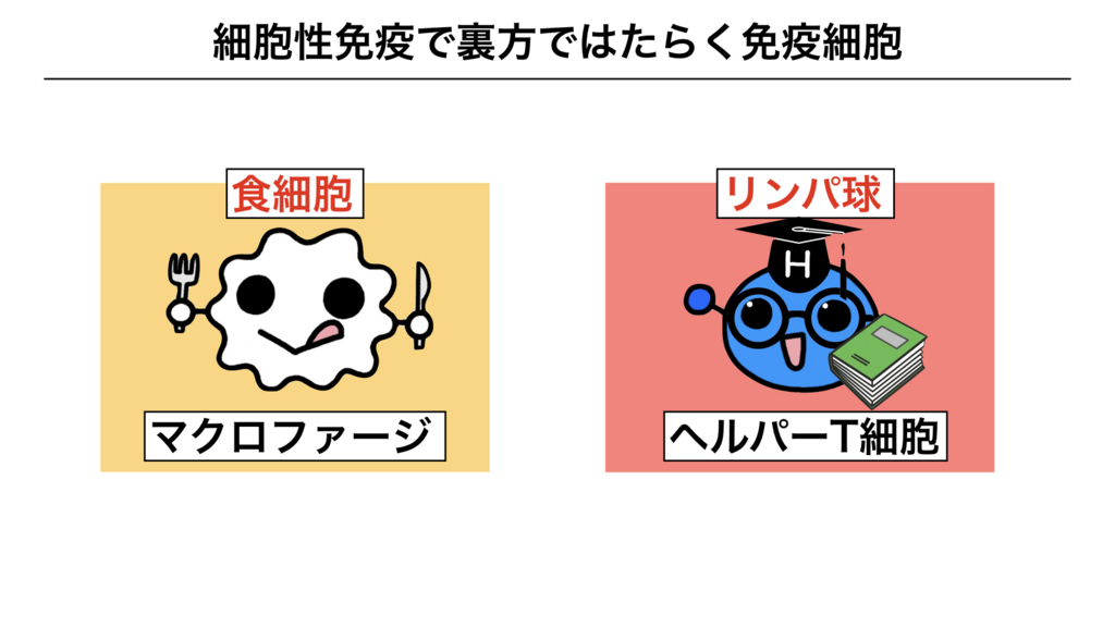 f:id:shimasensei:20180312075512j:plain