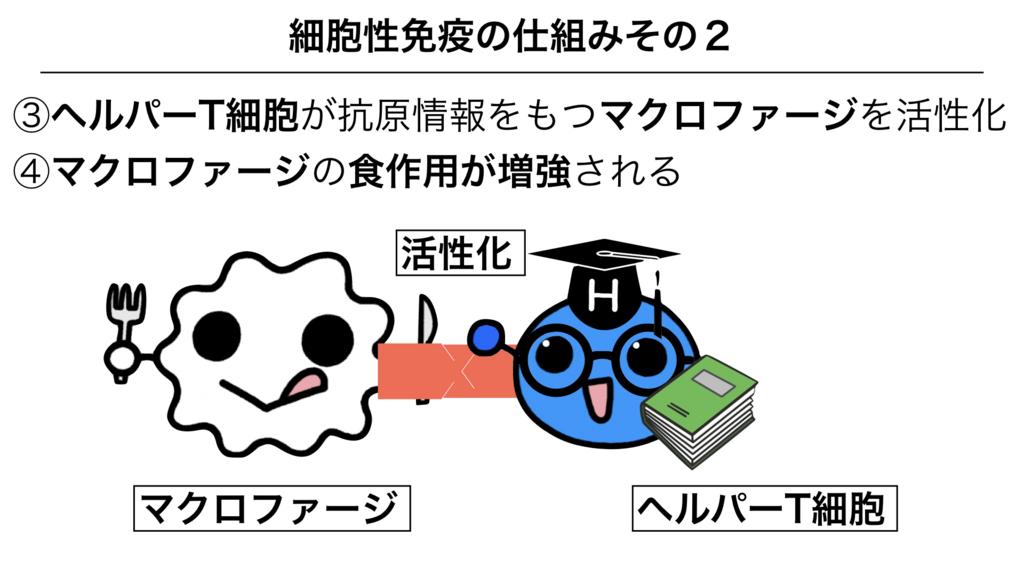 f:id:shimasensei:20180312075602j:plain