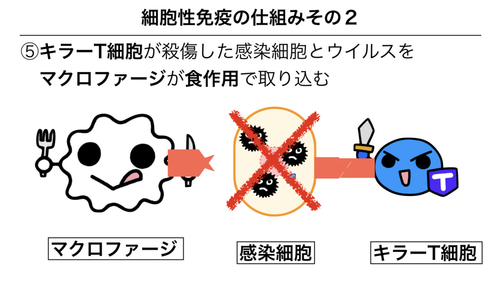 f:id:shimasensei:20180312075628j:plain