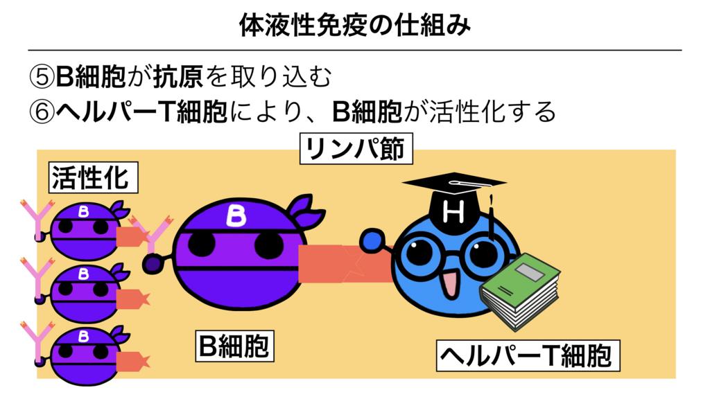 f:id:shimasensei:20180313173916j:plain