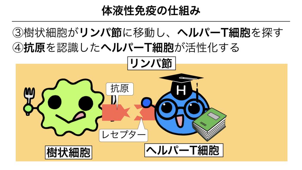 f:id:shimasensei:20180313173952j:plain