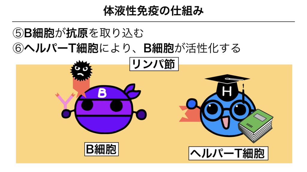 f:id:shimasensei:20180313174048j:plain