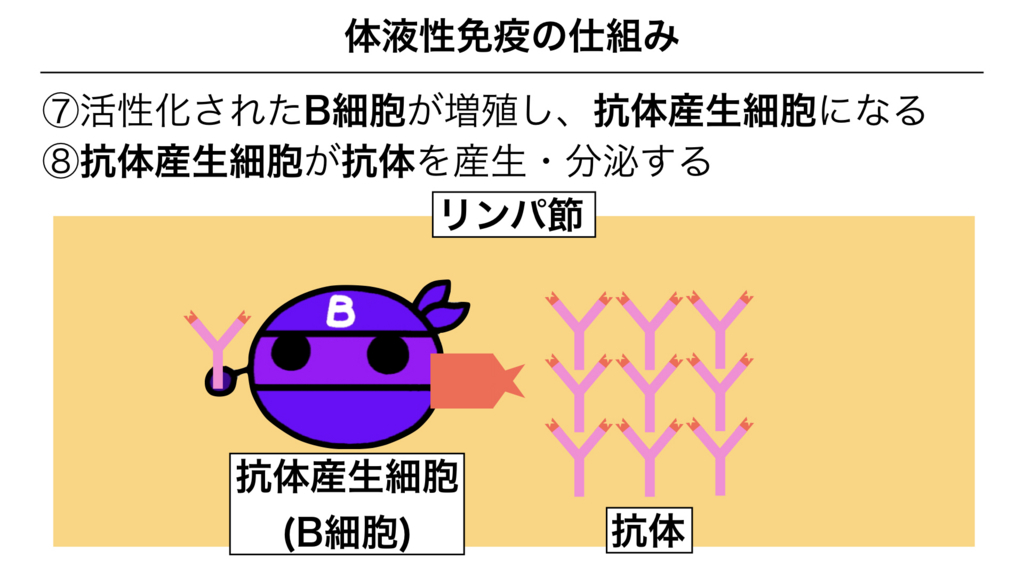 f:id:shimasensei:20180313174146j:plain