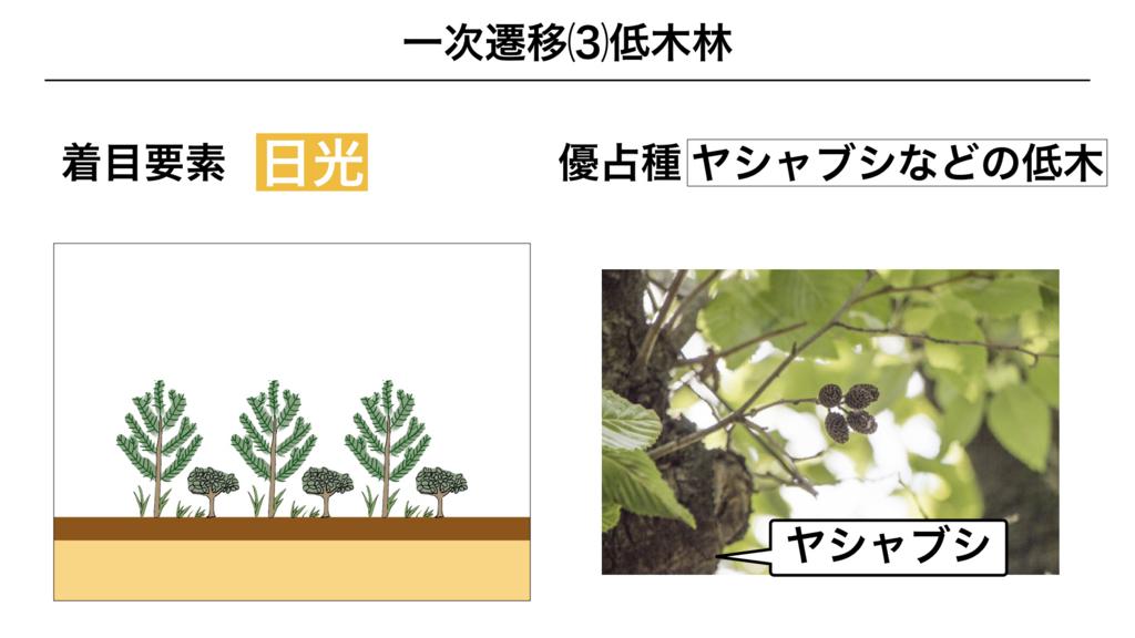 f:id:shimasensei:20180320195755j:plain