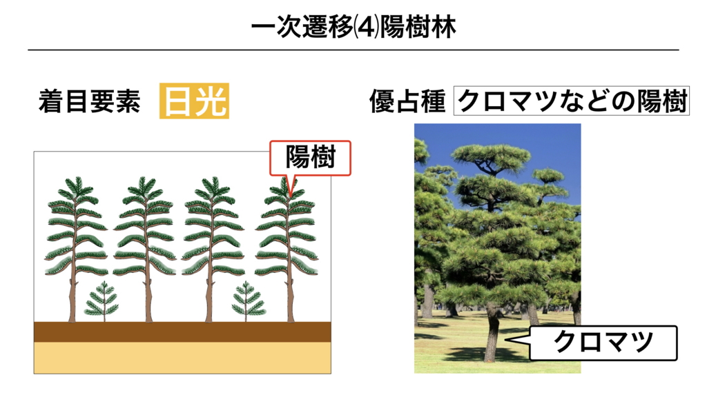 f:id:shimasensei:20180320195841j:plain