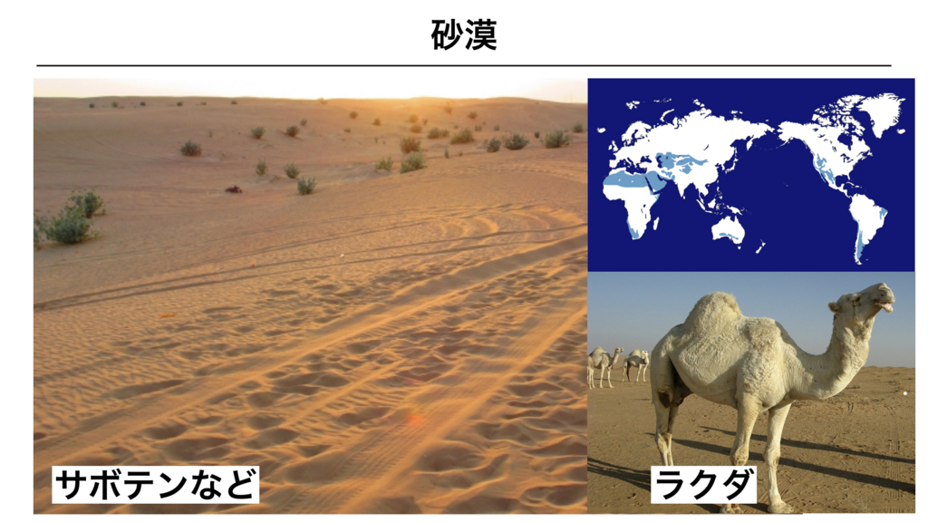 f:id:shimasensei:20180327031351j:plain