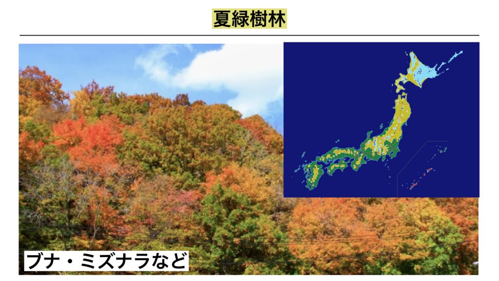 f:id:shimasensei:20180402205933j:plain