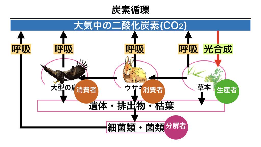 f:id:shimasensei:20180407200418j:plain