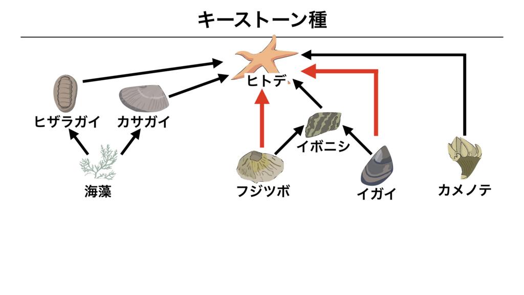 f:id:shimasensei:20180415050647j:plain
