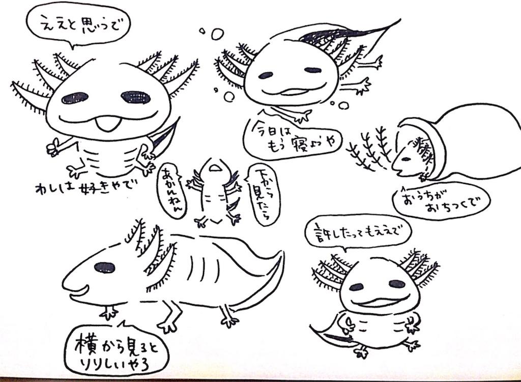 f:id:shimashimanegigi:20161102081953j:image