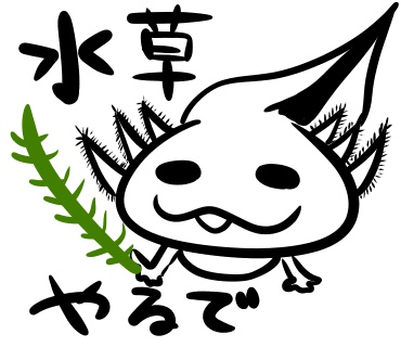 f:id:shimashimanegigi:20161104074627j:plain