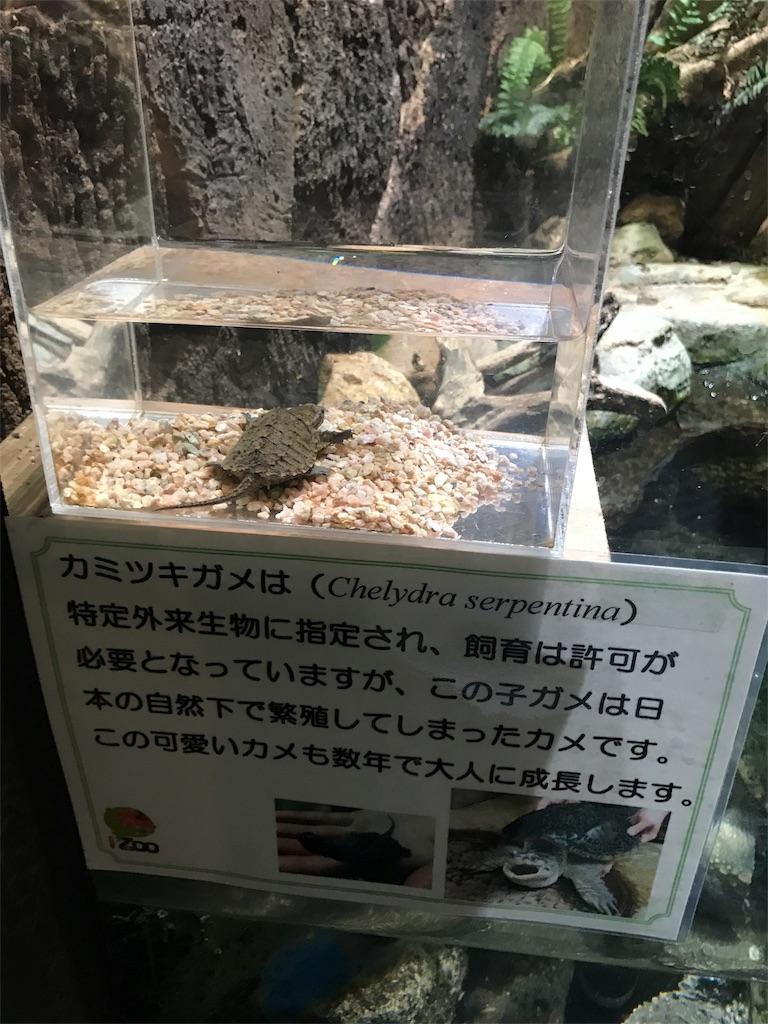 f:id:shimauma2692:20171015082156j:image