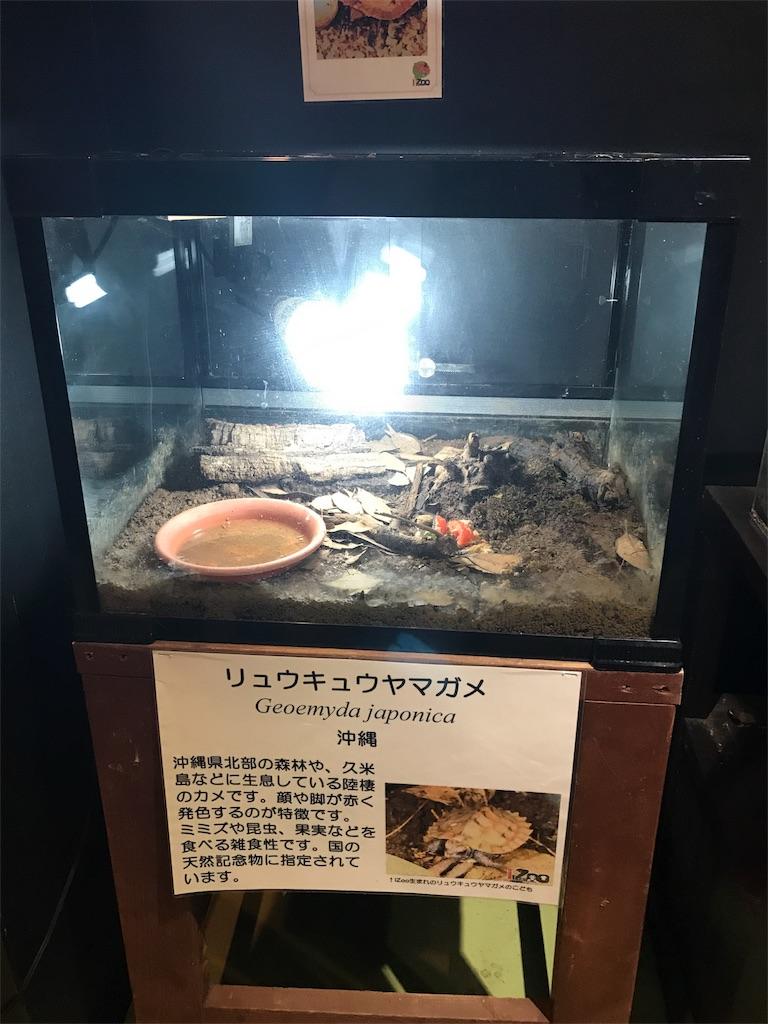 f:id:shimauma2692:20171015083925j:image