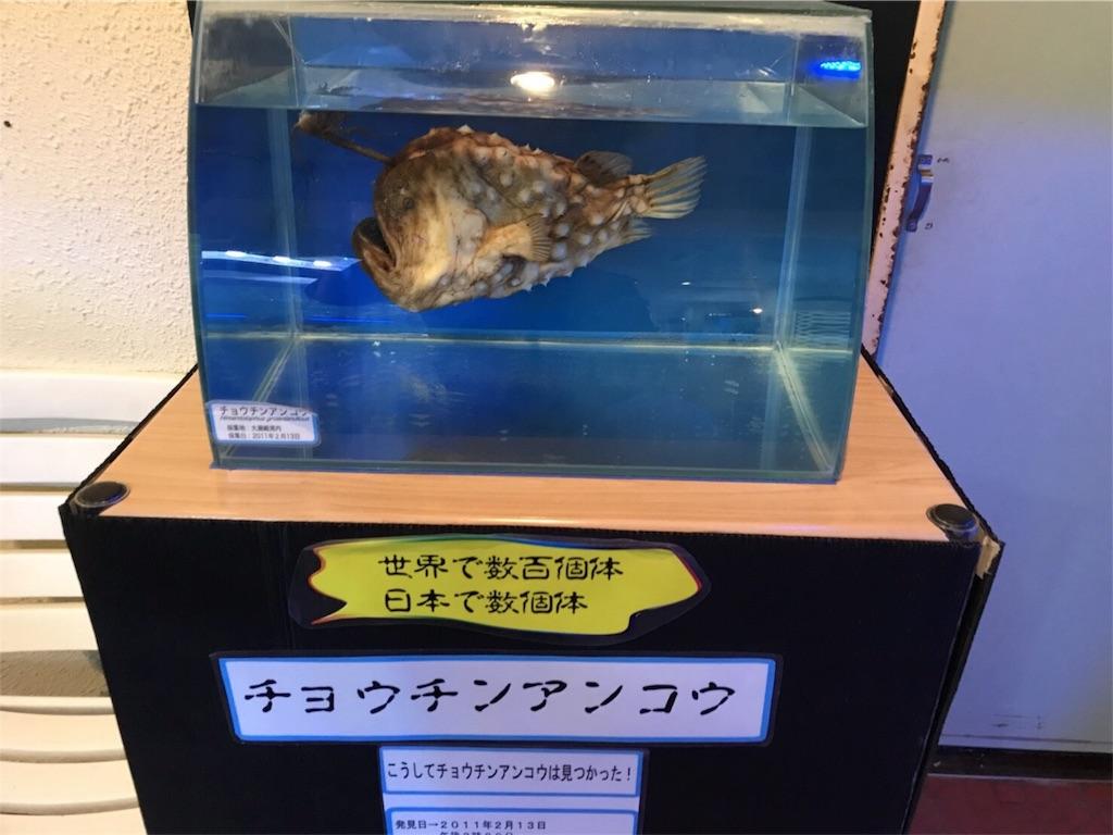 f:id:shimauma2692:20171217230410j:image