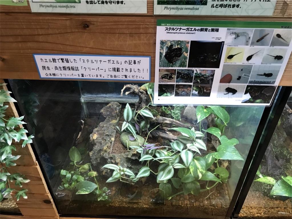 f:id:shimauma2692:20171218101100j:image