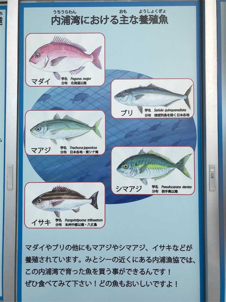 f:id:shimauma2692:20180116073827j:image