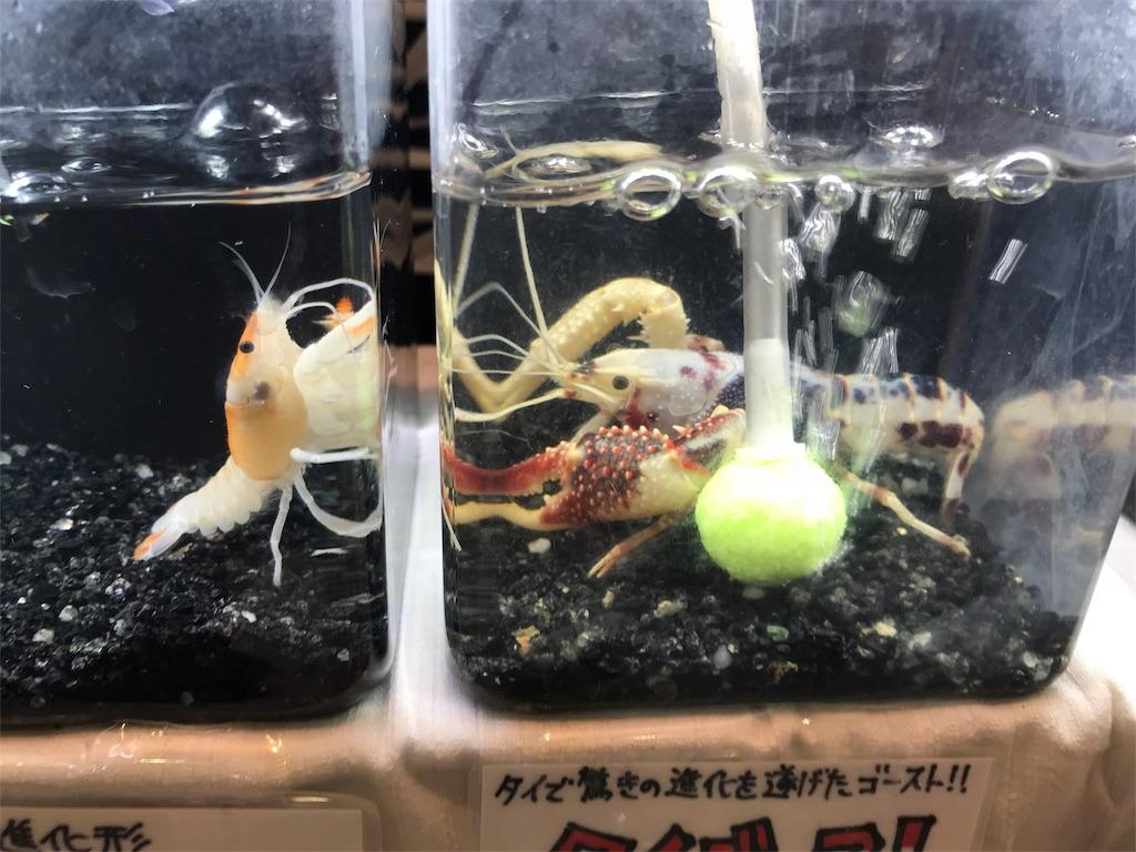 f:id:shimauma2692:20180121223504j:image