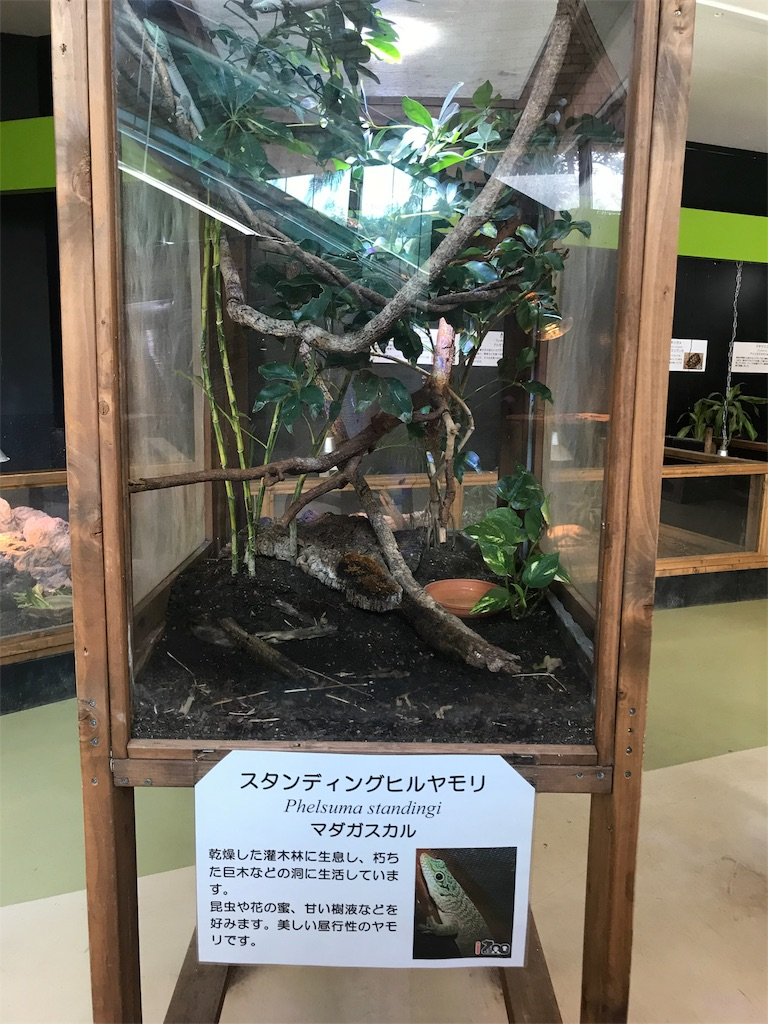 f:id:shimauma2692:20180316151417j:image