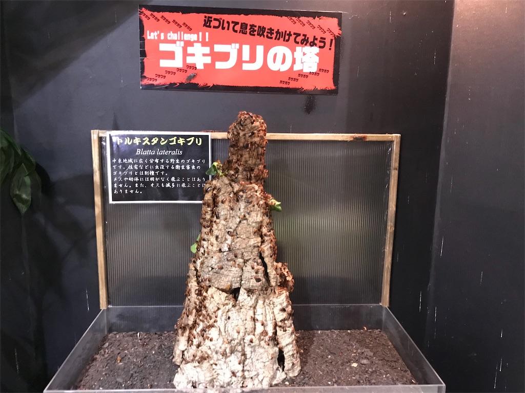 f:id:shimauma2692:20180316152049j:image