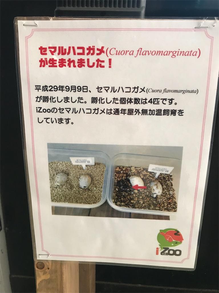 f:id:shimauma2692:20180318121949j:image