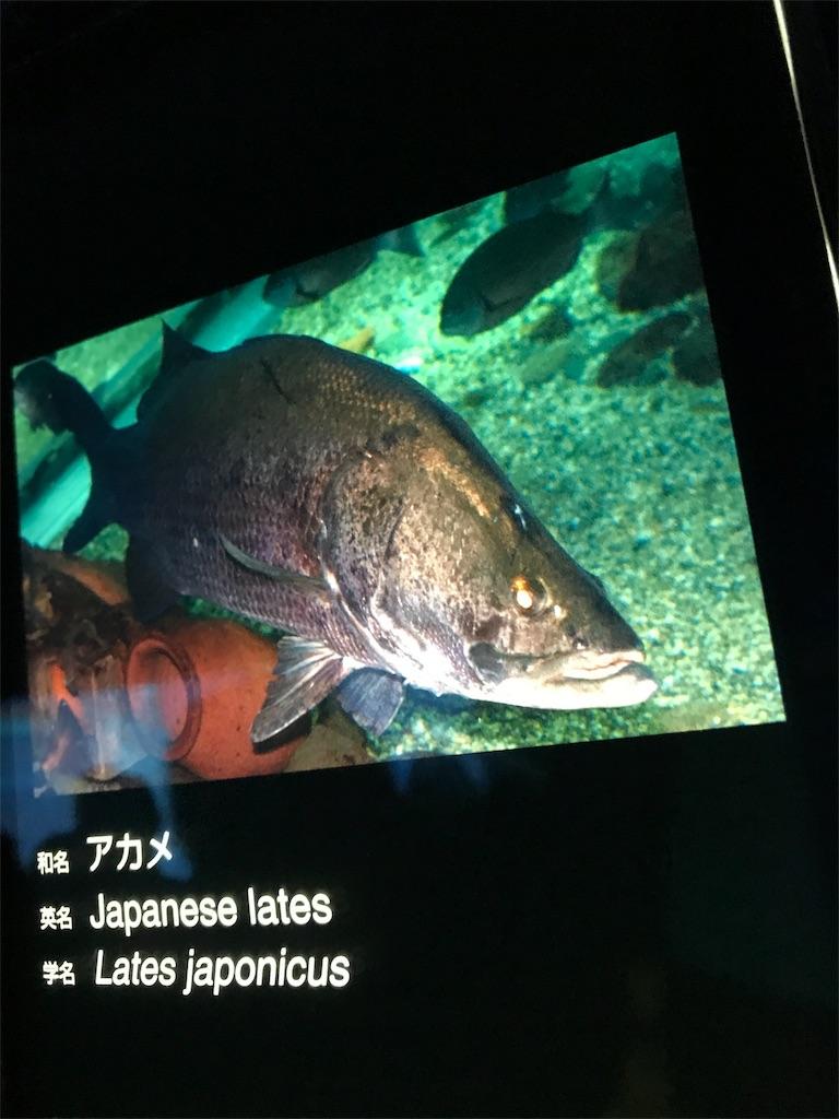 f:id:shimauma2692:20180610104548j:image